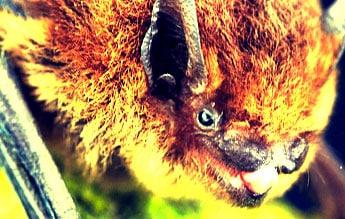 Fledermaus: Mit Fledermauskasten in die Beobachtung starten